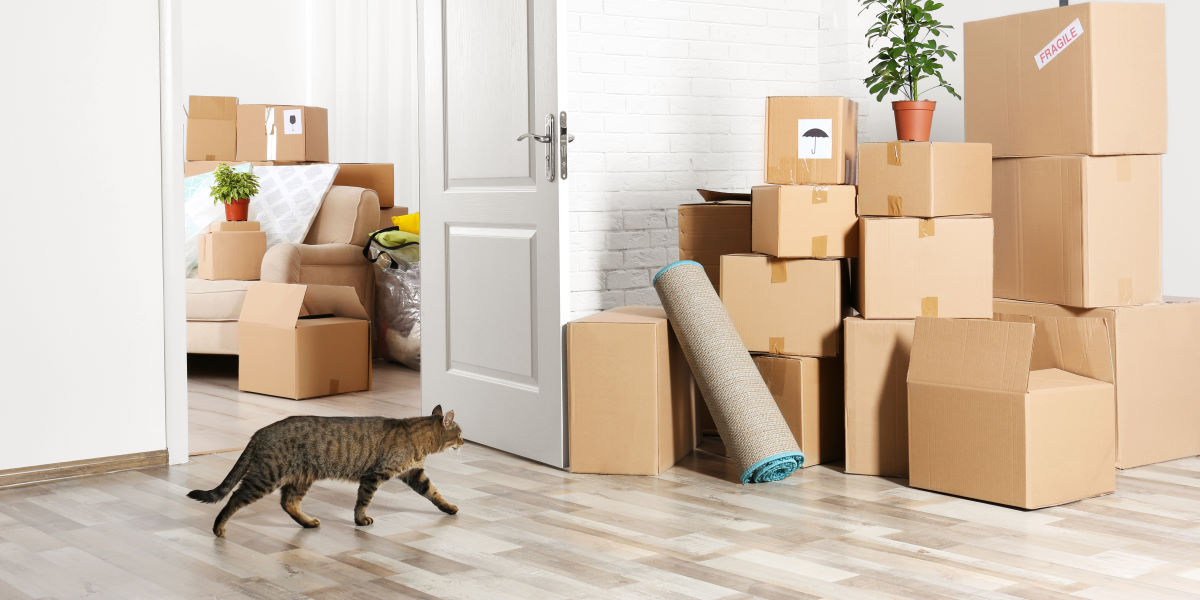 кошка переезд