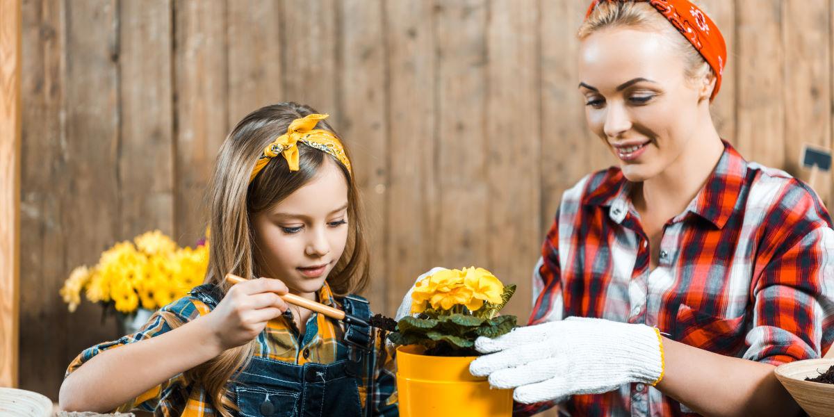 подготовка комнатных цветов