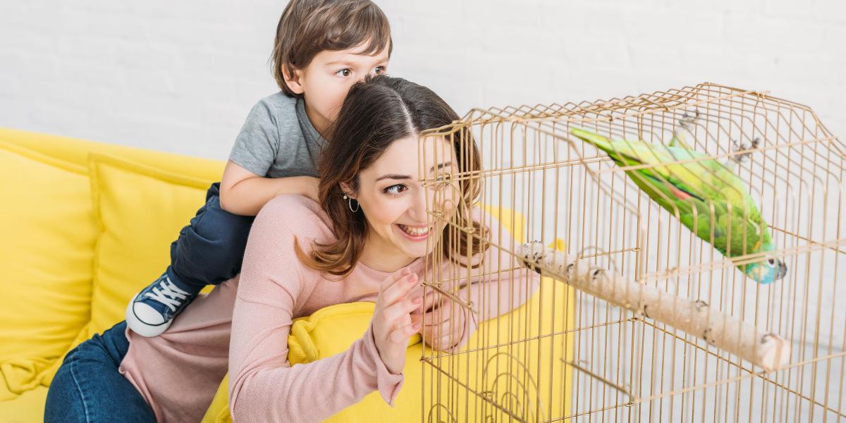 переезд с попугаем